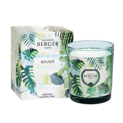 Lumanare parfumata Berger Immersion Fraicheur d'Eucalyptus 240g