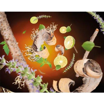 Set 2 parfumuri pentru lampa catalitica Berger Jonathan Adler Duopack MR. & MRS. Wilderness & Citrus Breeze 2 x 250ml