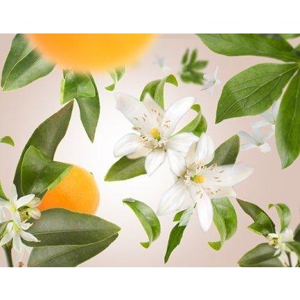 Difuzor parfum camera Berger Bouquet Parfume Amphora Framboise Orange Blossom 200ml
