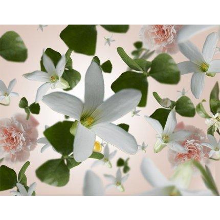 Parfum pentru difuzor Berger Bouquet Parfume Jasmin Precieux 200ml