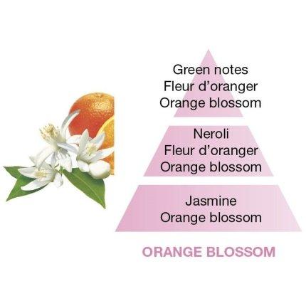 Set Berger lampa catalitica Berger Amphora Framboise cu parfum Fleur d'Oranger