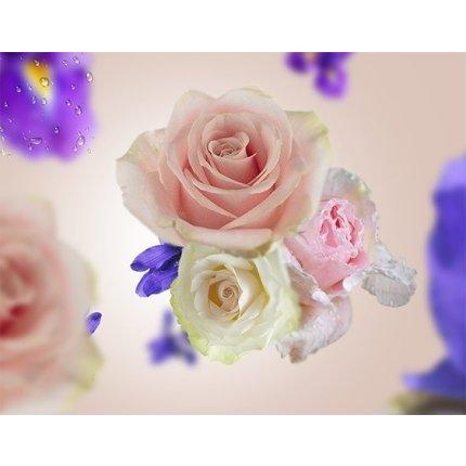 Set Berger lampa catalitica Alliance Violette cu parfum Paris Chic