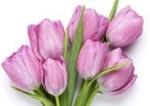 Gama florala